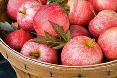 φθινόπωρο μήλων Στοκ Φωτογραφία