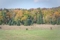 Φθινόπωρο με τα δέντρα Chirstmas Στοκ Εικόνες