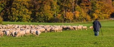 Φθινόπωρο με τα πρόβατα και τον ποιμένα Στοκ Φωτογραφία