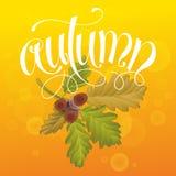 Φθινόπωρο με το βελανίδι και τα φύλλα Στοκ Φωτογραφίες