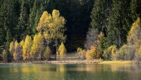 Φθινόπωρο με το κίτρινο φύλλωμα Στοκ εικόνα με δικαίωμα ελεύθερης χρήσης
