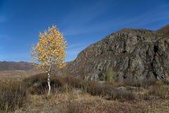 Φθινόπωρο, μόνη σημύδα στους απότομους βράχους υποβάθρου και μπλε ουρανός Στοκ Φωτογραφία
