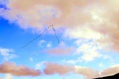 Φθινόπωρο Μύγα πουλιών μακριά στα θερμότερα μέρη Στοκ εικόνα με δικαίωμα ελεύθερης χρήσης