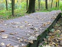 Φθινόπωρο Ξύλινη διάβαση πεζών στο πάρκο Στοκ Φωτογραφίες