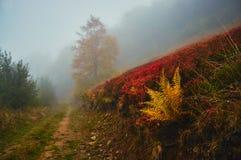 Φθινόπωρο ομίχλης φτερών Στοκ φωτογραφία με δικαίωμα ελεύθερης χρήσης
