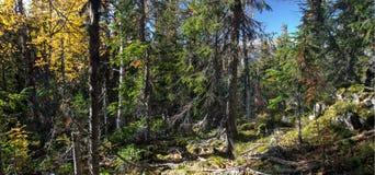 Φθινόπωρο Ουραλίων Στοκ φωτογραφίες με δικαίωμα ελεύθερης χρήσης