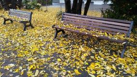Φθινόπωρο πάγκων με τα φύλλα Στοκ Εικόνα