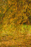 Φθινόπωρο πάρκων Στοκ εικόνα με δικαίωμα ελεύθερης χρήσης