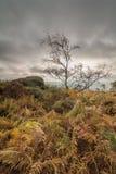 Φθινόπωρο πέρα από τη σκαπάνη Owler Στοκ φωτογραφίες με δικαίωμα ελεύθερης χρήσης
