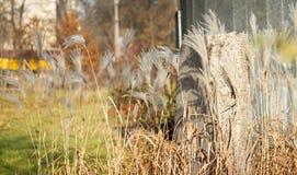 Φθινόπωρο, πέτρα και κάλαμοι στο πάρκο Στοκ Φωτογραφία