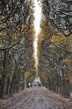 φθινόπωρο Παρίσι Στοκ Εικόνα