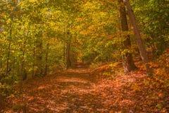 Φθινόπωρο περπατήματος στοκ φωτογραφία με δικαίωμα ελεύθερης χρήσης