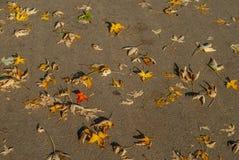φθινόπωρο πεσμένος Στοκ Φωτογραφία