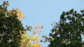 Φθινόπωρο πιό forrest στον ουρανό φιλμ μικρού μήκους