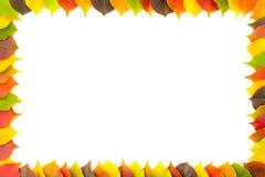 Φθινόπωρο Πλαίσιο συνόρων των ζωηρόχρωμων φθινοπωρινών φύλλων στο άσπρο υπόβαθρο Στοκ Εικόνα