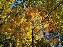 Φθινόπωρο που στο πειραματικό κρατικό πάρκο βουνών στοκ εικόνες με δικαίωμα ελεύθερης χρήσης