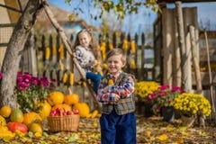 Φθινόπωρο που συλλέγει τα μήλα στο αγρόκτημα Τα παιδιά συλλέγουν τα φρούτα στο καλάθι κατσίκια διασκέδασης υπαίθρια στοκ εικόνες