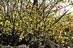 φθινόπωρο που χρωματίζετ&alp στοκ φωτογραφίες