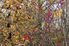 φθινόπωρο που χρωματίζετ&alp στοκ εικόνα με δικαίωμα ελεύθερης χρήσης