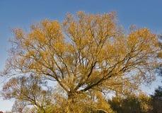 φθινόπωρο που χρωματίζετ&alp στοκ φωτογραφία με δικαίωμα ελεύθερης χρήσης