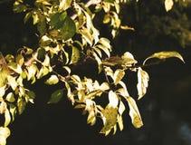 φθινόπωρο που χρωματίζετ&alp στοκ εικόνα