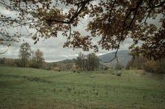 φθινόπωρο Πολωνία Στοκ φωτογραφία με δικαίωμα ελεύθερης χρήσης