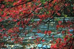 Φθινόπωρο-ΠΤΩΣΗ άκρα των κόκκινων φύλλων σφενδάμου πέρα από το μπλε ρεύμα στοκ εικόνες με δικαίωμα ελεύθερης χρήσης