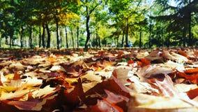 φθινόπωρο πτώσης Στοκ φωτογραφία με δικαίωμα ελεύθερης χρήσης