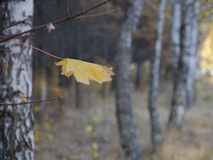 Φθινόπωρο, πτώση Στοκ εικόνα με δικαίωμα ελεύθερης χρήσης