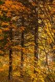 φθινόπωρο πυρκαγιάς Στοκ Φωτογραφίες