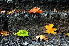 Φθινόπωρο πόλεων - πεσμένα φύλλα σφενδάμου στη σκάλα πετρών στοκ εικόνα