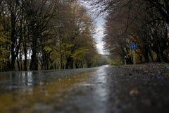 Φθινόπωρο, δρόμος και δέντρα με τα κίτρινα φύλλα Στοκ Εικόνες