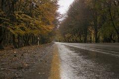 Φθινόπωρο, δρόμος και δέντρα με τα κίτρινα φύλλα Στοκ φωτογραφίες με δικαίωμα ελεύθερης χρήσης