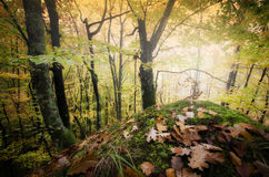 Φθινόπωρο σε ένα όμορφο δάσος με τα πεσμένα φύλλα Στοκ Φωτογραφίες