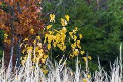Φθινόπωρο σε όλα τα χρώματα - βάλσαμο στην ψυχή Στοκ Εικόνα