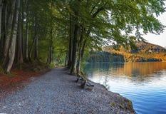 Φθινόπωρο σε Alpsee Στοκ φωτογραφίες με δικαίωμα ελεύθερης χρήσης