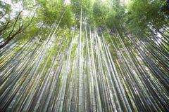 Φθινόπωρο σε Arashiyama, Κιότο, Ιαπωνία Στοκ Εικόνα