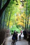 Φθινόπωρο σε Arashiyama, Κιότο, Ιαπωνία Στοκ Φωτογραφία