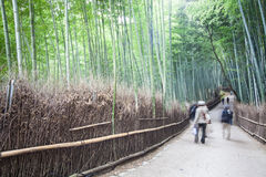 Φθινόπωρο σε Arashiyama, Κιότο, Ιαπωνία, 2014 Στοκ φωτογραφίες με δικαίωμα ελεύθερης χρήσης