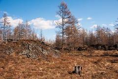 Φθινόπωρο σε Arshan, Κίνα Στοκ Φωτογραφίες