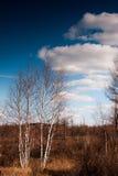 Φθινόπωρο σε Arshan, Κίνα Στοκ φωτογραφία με δικαίωμα ελεύθερης χρήσης