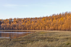 Φθινόπωρο σε Arxan, Κίνα Στοκ Φωτογραφία