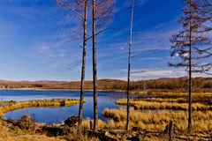 Φθινόπωρο σε Arxan, Κίνα Στοκ εικόνα με δικαίωμα ελεύθερης χρήσης