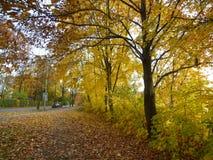 Φθινόπωρο σε Duisburg Στοκ Εικόνες