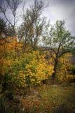 Φθινόπωρο στα βουνά στοκ εικόνα με δικαίωμα ελεύθερης χρήσης