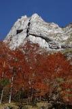 Φθινόπωρο στα βουνά Στοκ Εικόνες