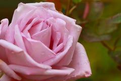 Φθινόπωρο στα λουλούδια Στοκ Φωτογραφίες