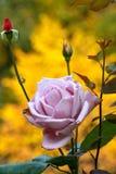 Φθινόπωρο στα λουλούδια Στοκ Εικόνες