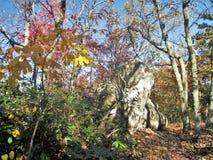 Φθινόπωρο στην ένωση του κρατικού πάρκου βράχου στοκ εικόνα