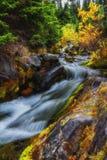 Φθινόπωρο στην ΑΜ Πιό βροχερό εθνικό πάρκο, πολιτεία της Washington στοκ φωτογραφία